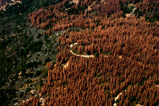 Aerial view of tree mortality. Credit: U.S. Forest Service Region 5 (CC BY2.0)